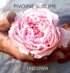 SELFIE READY SKIN WITH PIVOINE SUBLIME